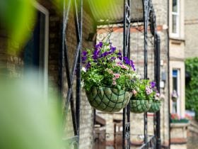 An image of hanging plants outside Studio Cambridge Main School, linking to a page on Studio Life.