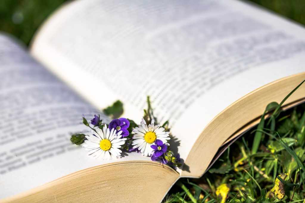 Daisies and other flowers lie in the crease between the pages of an open book lying on the grass in springtime